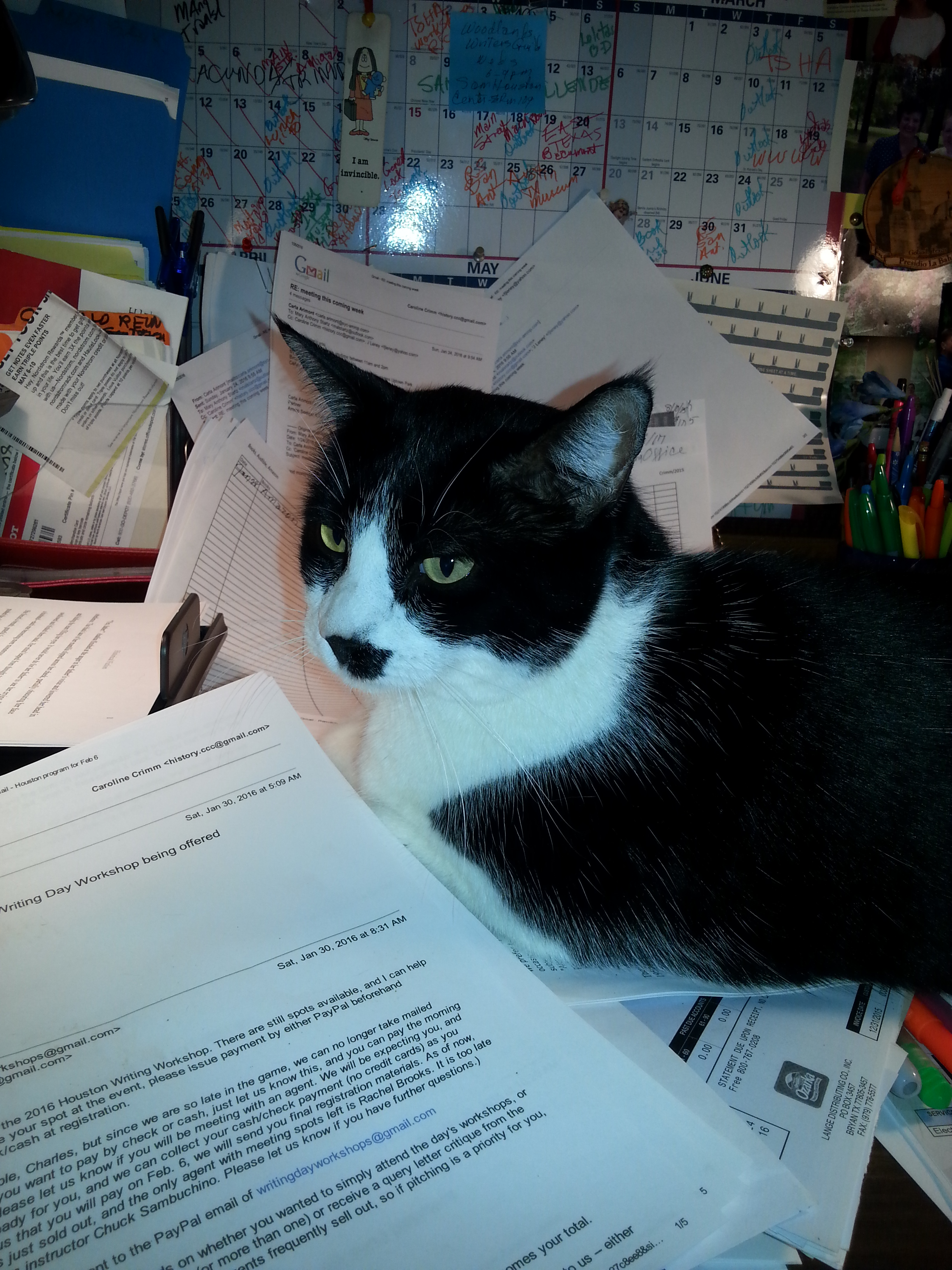 the pros and cons of conferences and conventions carolina helping out with taxes cats and taxes